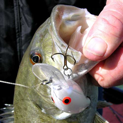 Search baits for all seasons